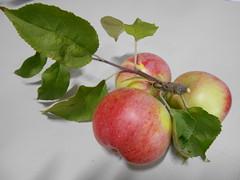apples (msergeevna) Tags: nikon apples food яблоки