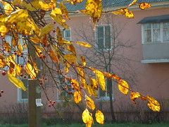 Little apples (cloversun19) Tags: rain animal field grass landscape branches leafs foliage sky russia russian spb tree walking country holiday holidays park garden dream dreams positive forest happy view grey legend fairytale fir firtree birch village evening romantic october september car road street blue maple leaves town city light sun yellow autumn trees leaf