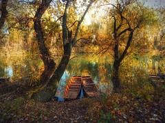 Tokaj (viktórianagynépetró1) Tags: autumn autumntime autumncolors