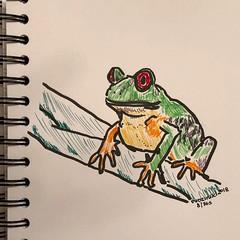 08/365 11-17-18 Tree Frog (Lainey1) Tags: treefrog art sketch frog branch nature draw sketching drawing illustration lainey1 elainedudzinski artist sketchbook