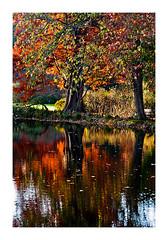 reflets d'automne (Marie Hacene) Tags: arboretum chatenaymalabry arbre reflets automne eau orange feuilles racines nature parc