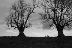 THE OLD COUPLE (MARRIED FOR MORE THAN 100 YEARS) (LitterART) Tags: tree baum trees bäume sonyrx100 monochrome steiermark austria relationship love pair paar kommunikation communication