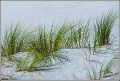 180913_0281_Zingst-R.jpg (juergenfrother) Tags: fischland dars zingst sand düne gras ostsee dune baltic sea balticsea darsserort