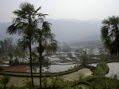 Yuanyang Rice Terraces (zomya.co) Tags: china chine cina southwestchina nature ontheroad topoftheworld travel travelling tourist tourism vacation discover discovery tour trip adventure free experience experiential guide wanderlust privatetour privatetours highlights itinerary best climax route journey program explore exploration destination destinations ecotourism sustainable responsible personalized customized individualized tailormade respectful photography zomya zomia yunnan yuanyang honghe hani riceterraces water sunrise paddy paddies green blue asia zomi