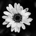 Gloomy September Flower