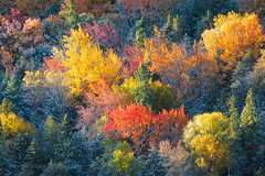 Autumn Glow (Kevin Pihlaja) Tags: brockwaymountain copperharbor keweenaw upperpeninsula michigan autumn fallcolors forest trees foliage morning sunrise sidelit nature landscape explore snow