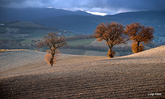 Marche countryside (Luigi Alesi) Tags: italia italy marche macerata san severino colmone paesaggio landscape scenery natura nature alberi querce trees campagna country countryside luce light rural nikon d750 raw