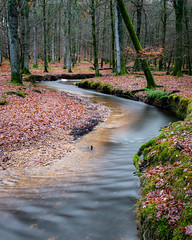 Flowing Forest (Alex Crane MSc) Tags: river stream longexposure woodland newforest hampshire fritham landscape canon green leaves leadingline tree water 10stop peaceful nature taking landscapes breathtakinglandscapes