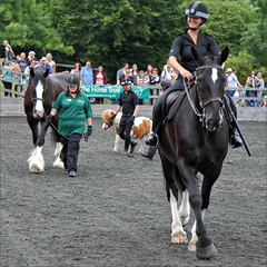 Present, Past, Future (meniscuslens) Tags: horses hounds heroes event charity police horse officer shetland pony aylesbury high wycombe princes risborough buckinghamshire