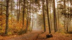 (Philippe Vieux-Jeanton) Tags: fontainebleau france forest foret fog sel18135 2018