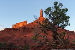 Castle Valley, UT (mhoffman1) Tags: castlerock castlevalley castletontower desert moab priestandnuns sonyalpha therectory utah landscape redrock sandstone sunset tree unitedstates us