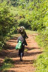 180919 Kakamega Forest National Reserve   -8471 (Serge Léonard) Tags: kakamegaforestnationalreservekenya kenya oiseaux transport avion continentafricain humain métier
