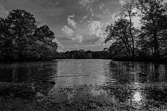 The water at dusk (PhredKH) Tags: canonphotography connaughtwater eppingforest essex forest fredkh photosbyphredkh phredkh splendid lake nature scencwater water 2470mm ef2470mmf4lisusm canoneos5dmarkiii sky tree monochrome blackandwhite landscape