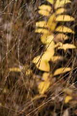 Yellow has your back (j.a.vink) Tags: yellow 1855 fujifilm fujifilm1855mm fujixt2