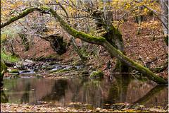 Otoño en Zilbeti (Agustin Peña (raspakan32) Fotero) Tags: agustin agustinpeña raspakan32 nature naturaleza natura nafarroa navarra navarre nikon nikond7200 nikonista nikonistas nikond d7200 otoño autumn udazkena
