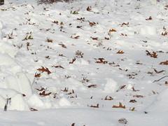 First Snow_9481 (smack53) Tags: smack53 canon powershot sx530hs canonpowershotsx530hs winterscenery snow snowfall snowscape snowy snowstorm autumn autumnseason fall fallseason november westmilford newjersey