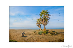 il mare, the sea (adrianaaprati) Tags: mare palme sea sand palms birds seagulls sky november autumn