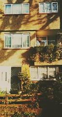 one-one-nine (BedBrochFlick) Tags: londres london isleofdogs millwall uk garden front windows nets jardin england mmxviii 2018 autumn frontgarden ldn londinium londra