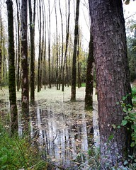 Saravan Marsh. Gillan. (A - Babayan) Tags: iran saravan gillan landscape marsh swamp voigtlander fuji