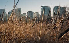 First film shot on my Rollei 35 developed! (Martin Berthiaume) Tags: zeiss vancouver portra rollei35