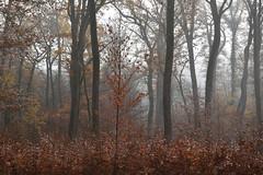 Les charmes de l'automne (Excalibur67) Tags: nikon d750 sigma globalvision art paysage landscape forest foréts arbres trees automne autumn nature brume brouillard mist fog 24105f4dgoshsma