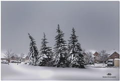 NOVEMBER 2018 NGM_9580_6215-1-222 (Nick and Karen Munroe) Tags: snow snowfall snowstorm snowy wintry winter fog foggy winterfog winterwonderland mist misty blackandwhite bw blackwhite bandw monochrome mono nikon2470f28 2470 2470f28 nikon2470 nikonf28 f28 karenick23 karenick karenandnickmunroe karenandnick munroe karenmunroe karen nickandkaren nickandkarenmunroe nick nickmunroe munroenick munroedesigns photography munroephotoghrpahy munroedesignsphotography nature landscape brampton bramptonontario ontario ontariocanada outdoors canada