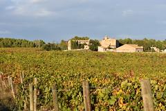 Cal Miret (esta_ahi) Tags: santmartísarroca vinya viña viñedo vineyard vitisvinifera penedès barcelona españa spain испания ipa2912 calmiret