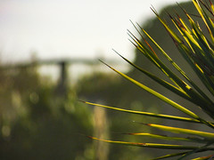 The Flax of Life (Steve Taylor (Photography)) Tags: flax thescream green yellow white newzealand nz southisland canterbury christchurch newbrighton tree bokeh outoffocus oof autumn sunny sunshine