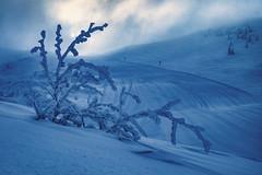 Blue Friday (Bergfex_Tirol) Tags: bergfex oostenrijk oesterreich austria autriche österreich piste slope schnee baum blau winter snow blue tree waidring steinplatte