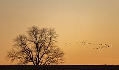 Return from feeding #2 (TDP43) Tags: birds chestercounty pa google flickr