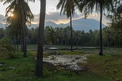 Sam Roi Yot (sillie_R) Tags: mountains nationalpark samroiyot swamp thailand tree prachuapkhirikhan th