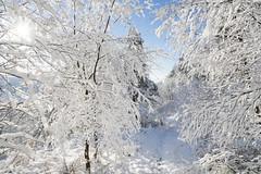 Snowy january morning (Keartona) Tags: tintwistle glossop derbyshire england pennines hills snowy snow winter landscape january morning beautiful nature trees bright snowcovered winterwonderland sun sunlight sunny path walk footpath
