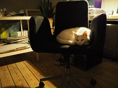 Going home (4): My chair is occupied (bohelsted) Tags: lowkey lowlight warmcold cat home varioelmarit leicadg em5markii 1260 chair