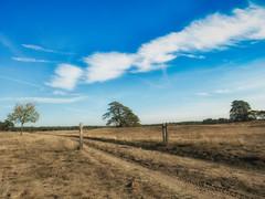 Uitzicht Hoge Veluwe (ome.henk) Tags: herfst veluwe 2018 kootwijk burgers hogeveluwe natuur bomen bos zand dieren