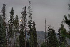 Moonrise over Sequoia II (Christopher Wallace) Tags: fullmoon moonrise moon sequoianationalpark sequoiaandkingscanyonnationalparks sequoia nationalpark nationalparkservice parkservice parks park sierranevadas sierranevada sierranevadamountains threeriverscalifornia threerivers tulare tularecountycalifornia california cali ca usa us unitedstates american america wildamerica wild wilderness summer travel greatoutdoors getoutside sequoias giantsequoia redwoods redwood whitepines pines pine tree trees forest woods wald bosque mountain mountainside landscape sky nature natural beauty beautiful earth earthy nikon d500 digital 18200mm 18200 hdr green