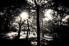 日向 - 04