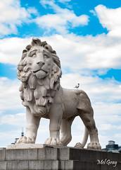 South-Bank-lion_DSC9348 (Mel Gray) Tags: london england unitedkingdom