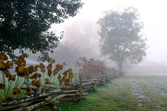 Fence Line with Tree (Neal3K) Tags: georgia northgeorgia fog dillardga trees landscape