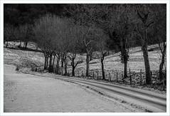 Senza titolo 150 (Outlaw Pete 65) Tags: paesaggi landscapes alberi trees campi fields neve snow strada road tracce tracks inverno winter biancoenero blackandwhite fujixe3 fujinon1855mm sulzano lombardia italia