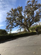 9/365 (boxbabe86) Tags: 2019 leasingagent stevensonranch wednesday woman walking iwatchshutter candid work oaktree tree 10secondtimer photoaday timer iphone8plus 365days january day9