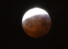 JTL_20190121_070229_cut_800px (Beijitaian20) Tags: astronomy astronomie evenement event ciel sky lune moon january 2019 eclipse lunaire macro personnes sur la photo sang blue blood rouge red janvier