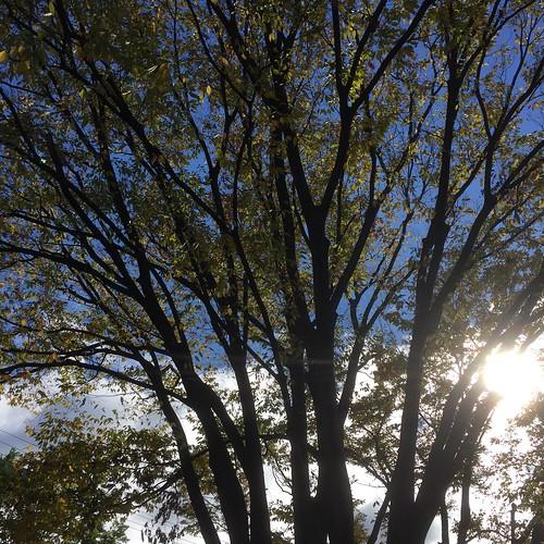 朝の木漏れ日