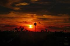 09 (morgan@morgangenser.com) Tags: sunset pretty beautiful red orange colorful evening dusk clouds blue palmtree santamonicacollege smc silhouette sun yellow cool