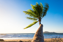 Palm Tree - Mission Beach (Theo Crazzolara) Tags: missionbeach mission beach palm palmtree sand ocean coast australia queensland tropical tropic scenic scenery landscape nature natural vacation holiday balance relaxing relax swimming