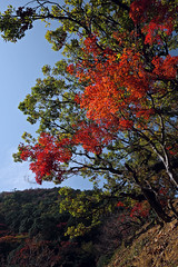 Fall Foliage (bacon.dumpling) Tags: arashiyama arashiyamamonkeyparkiwatayama autumn fallfoliage fujifilmxpro2 fujinonxf16mmf14rwr japan koyo kyoto leafchangingseason