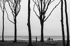 Solitude (Ulrich Neitzel) Tags: bw bank bare baum bench einsamkeit gespensterwald highcontrast kahl küste mzuiko1240mm monochrome november olympusem1 person schwarzweiss shore solitude tree horizon horizont absoluteblackandwhite