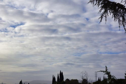 2019-01-18 - Nature Photography, The day after the Rain