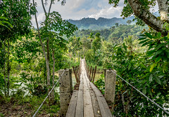 Ketambe. Exploring surroundings on motor (feisas) Tags: indonesia sumatra banda aceh water nature outdoor outside colorful color sun clouds mountains gunung alam bagus travel adventure sonya7 fullframe green jungle bridge motorcycle crazy ketambe river landscape narrow forest local remote wild