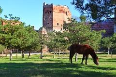 - (ismailucar) Tags: istanbul turkey nature history horse turkei canon 200d balat