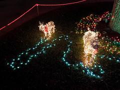 Christmas Lights Reindeer 2 (Lux Llama Productions) Tags: christmas lights holiday holidays winter december jan january dec decor decorations decoration prop jesus usa us unitedstates florida bocaraton house suburb hot light led cool awesome santa sleigh reindeer deer trees tree orb